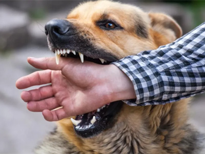 Self-defense against stray dogs